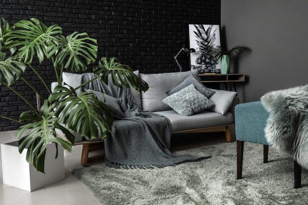 Quelles plantes choisir pour son intérieur ?