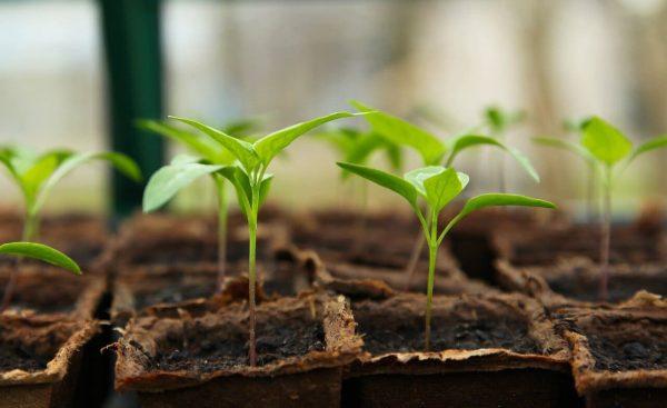 Comment réussir ses projets de jardinage